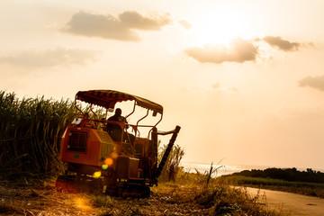日本最南端、沖縄波照間島のサトウキビ収穫 Fotomurales