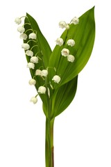 Foto op Textielframe Lelietje van dalen Lily of the valley
