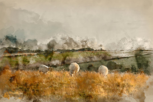 Digitally created watercolor painting of Beautiful vibrant Summer evening landscape image of sheep grazing in English countryside