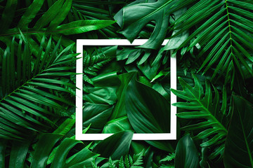 Wall Mural - tropical green leaves and palms with white paper note frame, nature flat lay concept