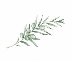 Einfacher Olivenzweig