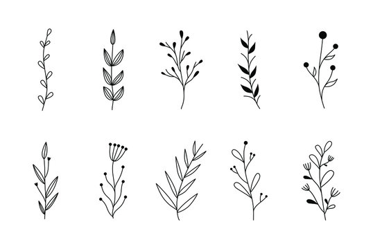 Floral graphic sketch drawing. Elegant simple tattoo design, hand drawing wild plants. Organic botanical vector set, ink illustration of flowers