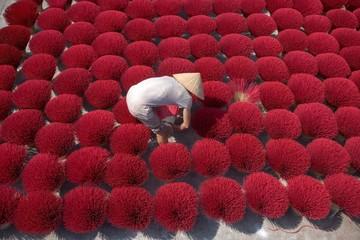 High Angle View Of Man Working Amidst Kochia Scoparia On Field