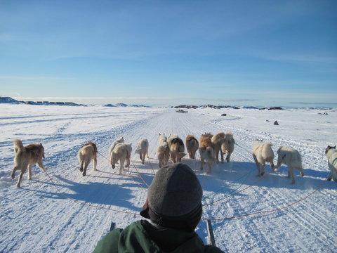 Musher on a dog sledge, Greenland