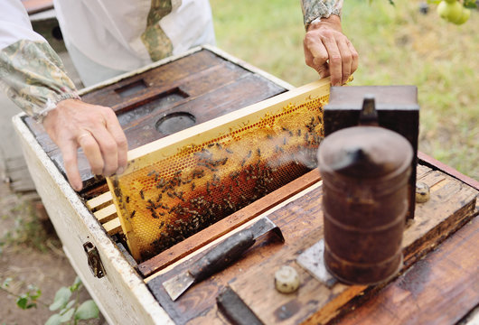 male bee-keeper with a smoke near an apiary or a beehive