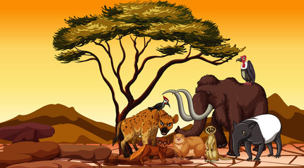 African animals in the field