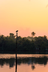 Fototapete - A fishing bird stands on a stilt on Kerala's Backwater lakes, in a tropical jungle popular for yoga retreat and birdwatching