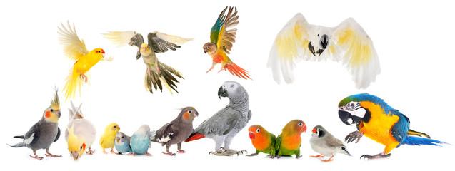 Fond de hotte en verre imprimé Perroquets group of birds