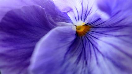 Deurstickers Macrofotografie purple flower macro