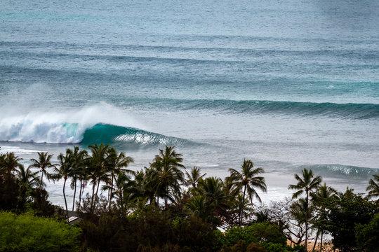 Banzai Pipeline waves through trees