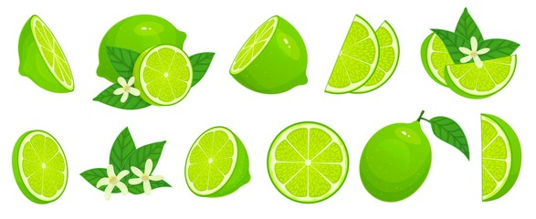 Cartoon lime. Limes slices, green citrus fruit with leaves and lime blossom isolated vector illustration set. Lime citrus fruit, green and juicy, juice vitamin organic Wall mural
