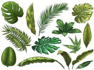 Wall Mural - Green tropical leaves. Hand drawn rainforest nature leaf, color sketched monstera leaves vector illustration set. Green leaf summer, plant palm tree