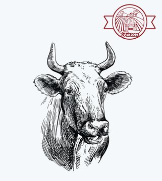 breeding cow. animal husbandry. livestock illustration on a grey