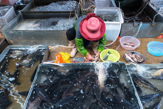 Woman cutting fresh fish