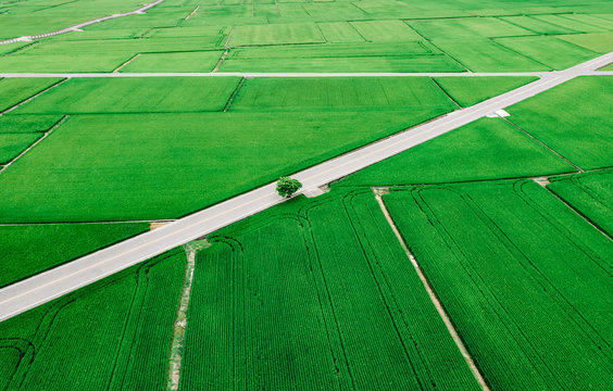 Aerial view of rice field in Taiwan