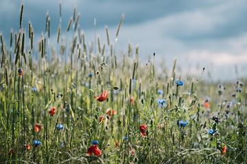 Summer Flower Field Fototapete