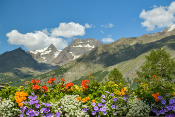 Wall Mural - Colorful flowers with beautiful high mountains in background