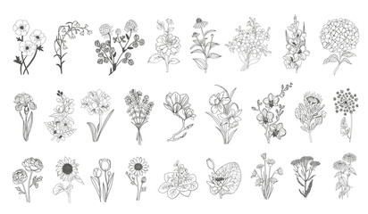 Vector set flowers illustration. 28 elements with botanical flowers outline with leaves in black isolated on white background. Ornate contour Anthurium flowers for summer design or coloring book.