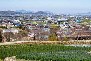Aerial view of Zentsuji city and flower garden , Kagawa, Shikoku, Japan