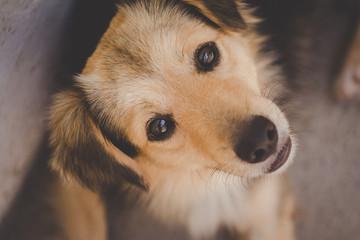 Fotografias do cachorro chamado Boby