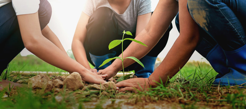 people helping planting tree in nature for save earth.
