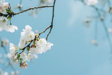 Close-up Of Cherry Blossom Tree Against Sky