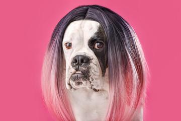 Funny dog in wig on color background Fotobehang