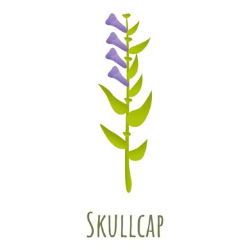Scullcap plant icon. Cartoon of scullcap plant vector icon for web design isolated on white background