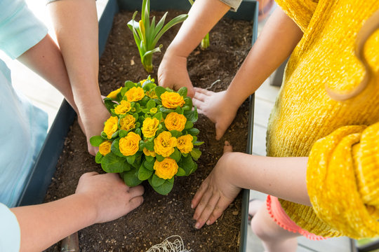 Yellow flowers are planted in a raised bed on the balcony.