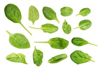 bazylia na białym tle biały liść tło świeży zioło zielony przyprawa organiczny szczyt widok ponad składnika jedzenie zdrowy roślina liść ziołowy zbliżenie surowy eteryczny naturalny wegetariańska natu Wall mural