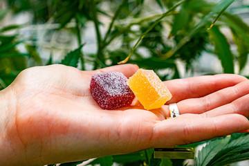 Fototapeta edibles gummies obraz