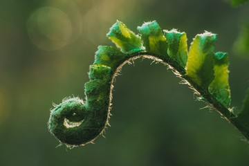 Closeup shot of a green fern with blurred background