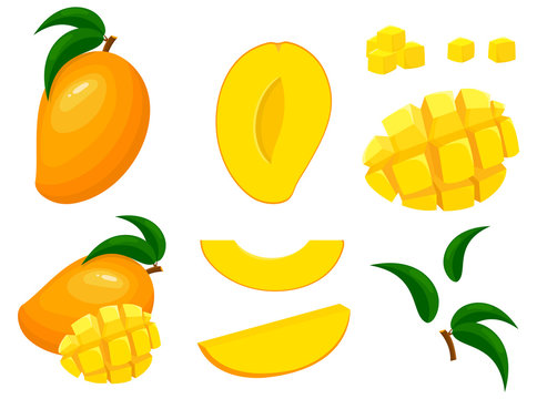Set of fresh whole, half, cut slice mango fruits isolated on white background. Summer fruits for healthy lifestyle. Organic fruit. Cartoon style. Vector illustration for any design.