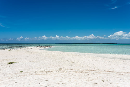 "Tropical white beach in ""Cayo Sardina"" with sea birds (Los Roques Archipelago, Venezuela)."