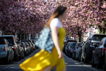 A woman passes cherry blossoms in a street in London