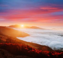 Wall Mural - Incredible morning moment in alpine foggy valley. Location Carpathian mountain, Ukraine, Europe.