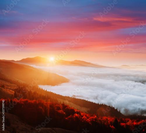 壁紙(ウォールミューラル) Incredible morning moment in alpine foggy valley. Location Carpathian mountain, Ukraine, Europe.