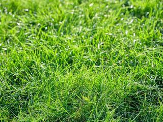 Trawa zielona w ogrodzie - fototapety na wymiar
