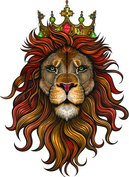 Vector Color Lion King Illustration