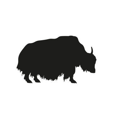 Black silhouette of domestic yak on white background