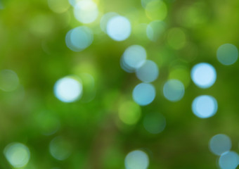 Wall Mural - Natural green bright blur background of sunny summer forest