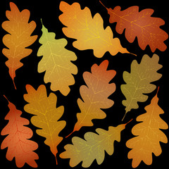 Wall Mural - autumn oak leaves black background