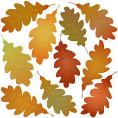Wall Mural - autumn oak leaves