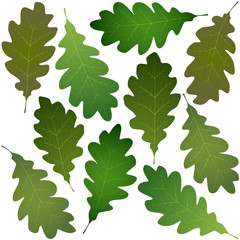 Wall Mural - oak leaves