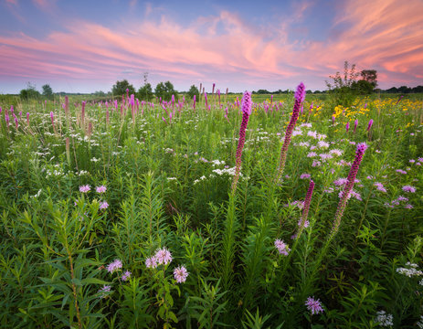 A dramatic sunset sky over a a prairie landscape full of blooming native wildflowers.