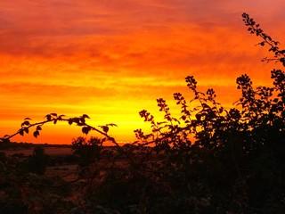 Foto auf AluDibond Rotglühen Silhouette Trees On Landscape Against Orange Sky