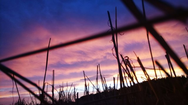 Low Angle View Of Silhouette Grass Against Sky At Sunset