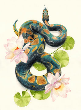 Watercolor pencil illustration of  a green snake among flowers of lotus