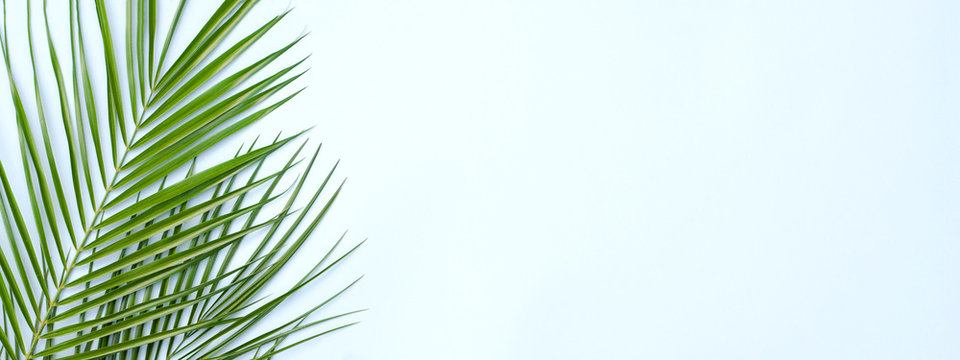 Banner for the site with a tropical palm branch.