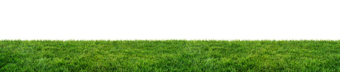 Poster Cultuur green grass field isolated on white background